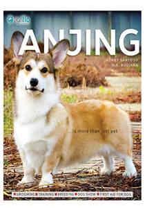 Anjing (Agriflo)