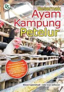 Berternak Ayam Kampung Petelur