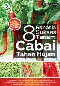 8-RAHASIA-SUKSES-TANAM-CABAI-TAHAN-HUJAN